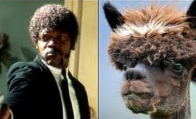 Image result for people who look like alpaca